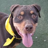 Adopt A Pet :: LEO - Las Vegas, NV