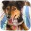 Photo 1 - Border Collie/Collie Mix Dog for adoption in Wakefield, Rhode Island - KATIE