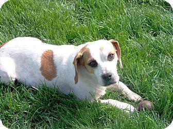 Beagle Mix Dog for adoption in Elyria, Ohio - Pearl Moon