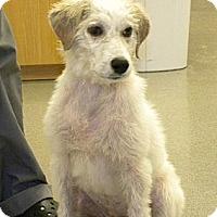 Adopt A Pet :: Hope - Kingwood, TX