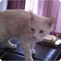 Adopt A Pet :: Squint Eastwood - Morgan Hill, CA