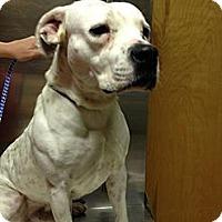 Adopt A Pet :: Rex - Owasso, OK