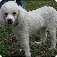 Adopt A Pet :: King - Houston, TX