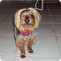 Adopt A Pet :: Randy - West Palm Beach, FL