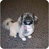 Adopt A Pet :: Meka - Adopted - Columbia Falls, MT