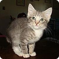 Adopt A Pet :: Guinness - Spotsylvania, VA