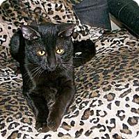 Adopt A Pet :: Orson - Scottsdale, AZ
