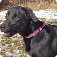 Adopt A Pet :: Damsel - Cincinnati, OH