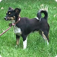 Adopt A Pet :: Edison - Norwalk, CT