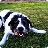Adopt A Pet :: Bosco - Norwalk, CT