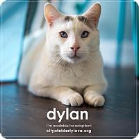 Domestic Mediumhair Cat for adoption in Philadelphia, Pennsylvania - DYLAN!