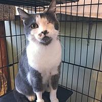 Adopt A Pet :: Adele - Stone Mountain, GA