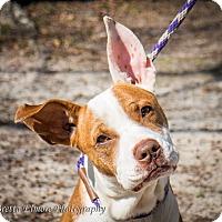 Adopt A Pet :: Rusty - Daleville, AL