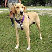 Adopt A Pet :: Millie - Freeport, FL