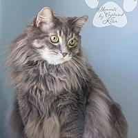 Adopt A Pet :: DANNY - Toledo, OH