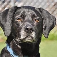 Adopt A Pet :: Dempsy - Asheville, NC