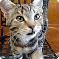 Adopt A Pet :: Electra - Columbus, OH