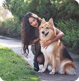 German Shepherd Dog/Collie Mix Dog for adoption in Irvine, California - Leah