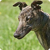 Adopt A Pet :: Fee - Portland, OR
