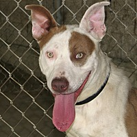 Adopt A Pet :: Shelly - Ruidoso, NM