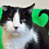 Adopt A Pet :: B.W. - Redmond, OR
