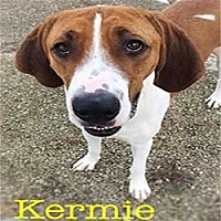 Adopt A Pet :: Kermie - Warren, PA