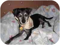 Chihuahua/Terrier (Unknown Type, Small) Mix Dog for adoption in Carrollton, Texas - Lilly