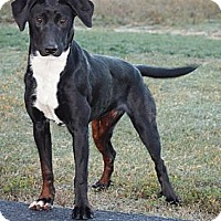 Adopt A Pet :: Beatty - Lewisville, IN
