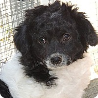 Adopt A Pet :: Grace - La Habra Heights, CA
