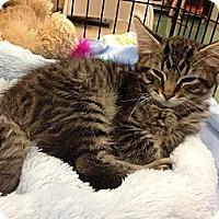 Adopt A Pet :: Max - Vero Beach, FL