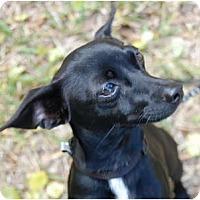 Adopt A Pet :: Tank - Vero Beach, FL