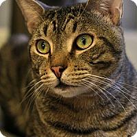 Adopt A Pet :: Braveheart - Columbia, MD