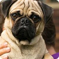 Adopt A Pet :: Budgie - Pismo Beach, CA