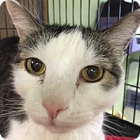 Adopt A Pet :: Sammy - Medina, OH