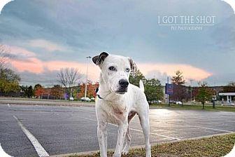 Labrador Retriever Mix Dog for adoption in Rexford, New York - Church