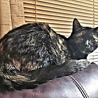 Adopt A Pet :: Precious - Rocky Hill, CT