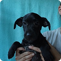 Adopt A Pet :: Alex - Oviedo, FL