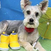 Adopt A Pet :: Bonnie - Centerville, GA