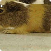 Adopt A Pet :: *Urgent* Quincy - Fullerton, CA