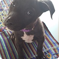 Adopt A Pet :: Angie - San Diego, CA