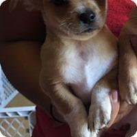 Adopt A Pet :: Tug - Temecula, CA