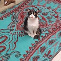 Adopt A Pet :: Yak Yak - Fresno, CA