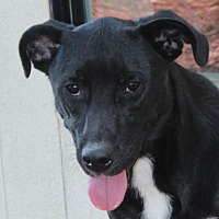 Adopt A Pet :: CRICKET-Altered & reduced fee - Red Bluff, CA