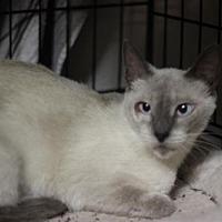 Adopt A Pet :: Willow Lady - Austin, TX