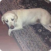 Adopt A Pet :: Oggie - Saskatoon, SK