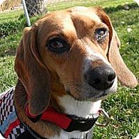 Adopt A Pet :: Sarah #5240 - Jerome, ID