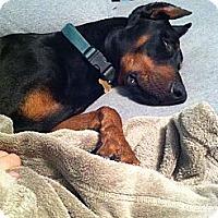 Adopt A Pet :: Hunter - spring valley, CA