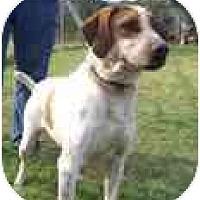 Adopt A Pet :: Charlie - Wakefield, RI