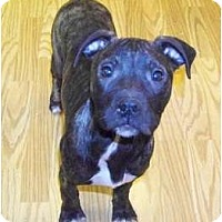 Adopt A Pet :: Mercy - Claypool, IN