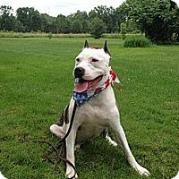 Adopt A Pet :: Jenny Gump - Grafton, OH